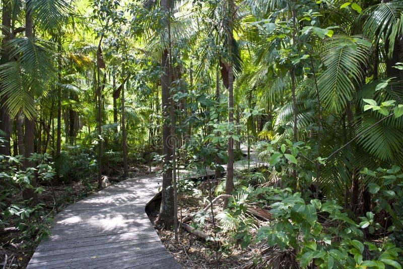 有人行道的密林 库存照片