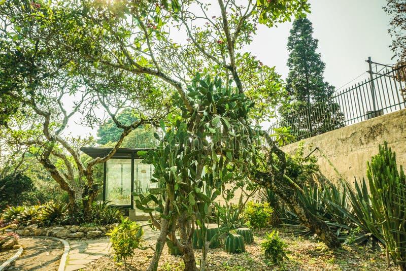有仙人掌的各种各样的类型的仙人掌房子在热带海岛在茂物印度尼西亚-照片 免版税库存图片