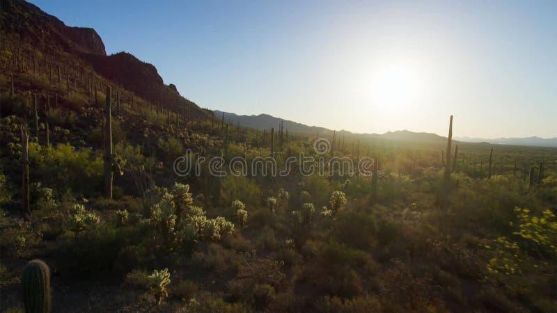 有仙人掌的多种类型的仙人掌森林在沙漠 库存图片