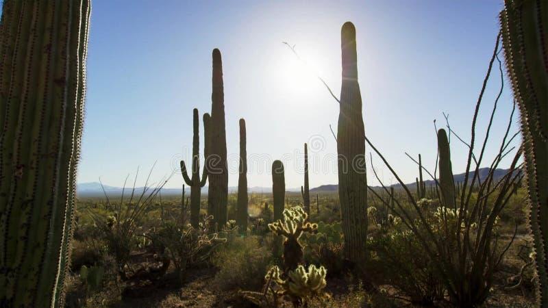 有仙人掌的多种类型的仙人掌森林在沙漠 库存照片