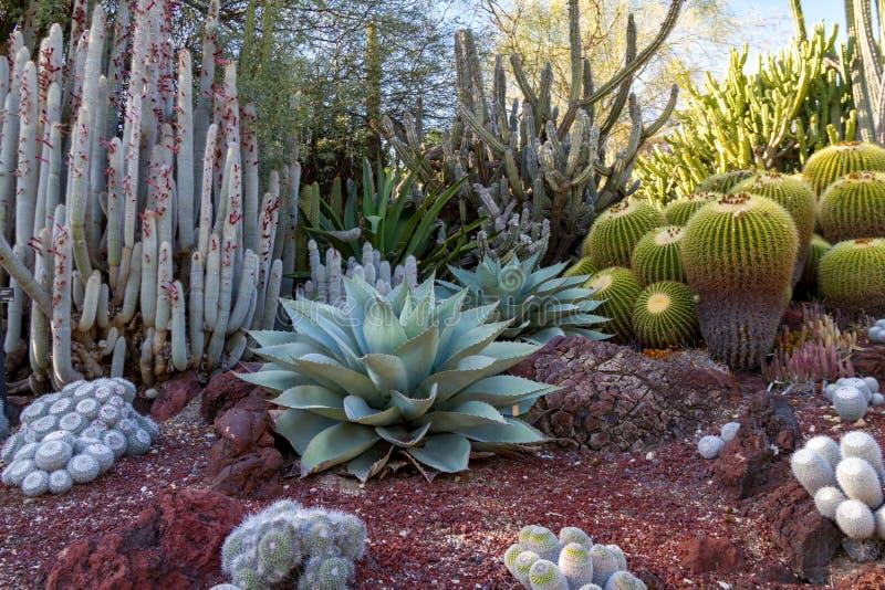 有仙人掌的多种类型的惊人的沙漠仙人掌庭院 免版税图库摄影