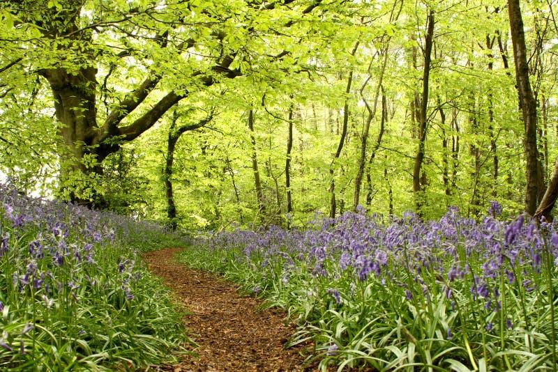 有会开蓝色钟形花的草的森林地道路 免版税库存照片