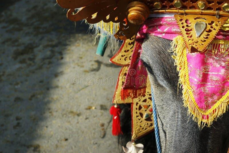 有传统装饰品的水牛城,在水牛种族节日-印度尼西亚期间 库存图片