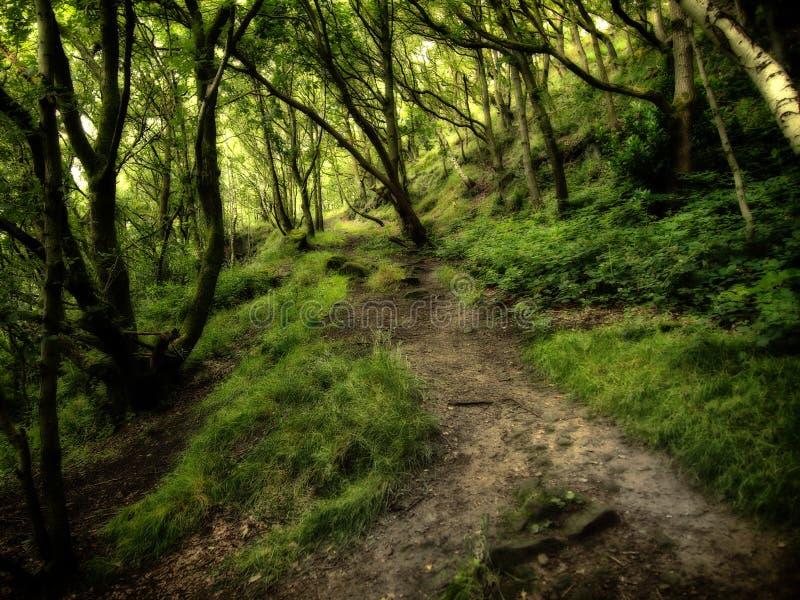 有伸出的树的黑暗的密集的绿色森林在森林地路 库存图片