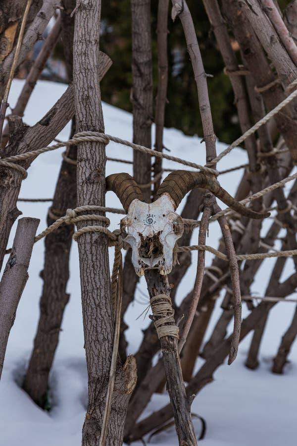 有倾斜反对树篱的山羊头骨的僧人职员,阿尔泰,俄罗斯 库存图片