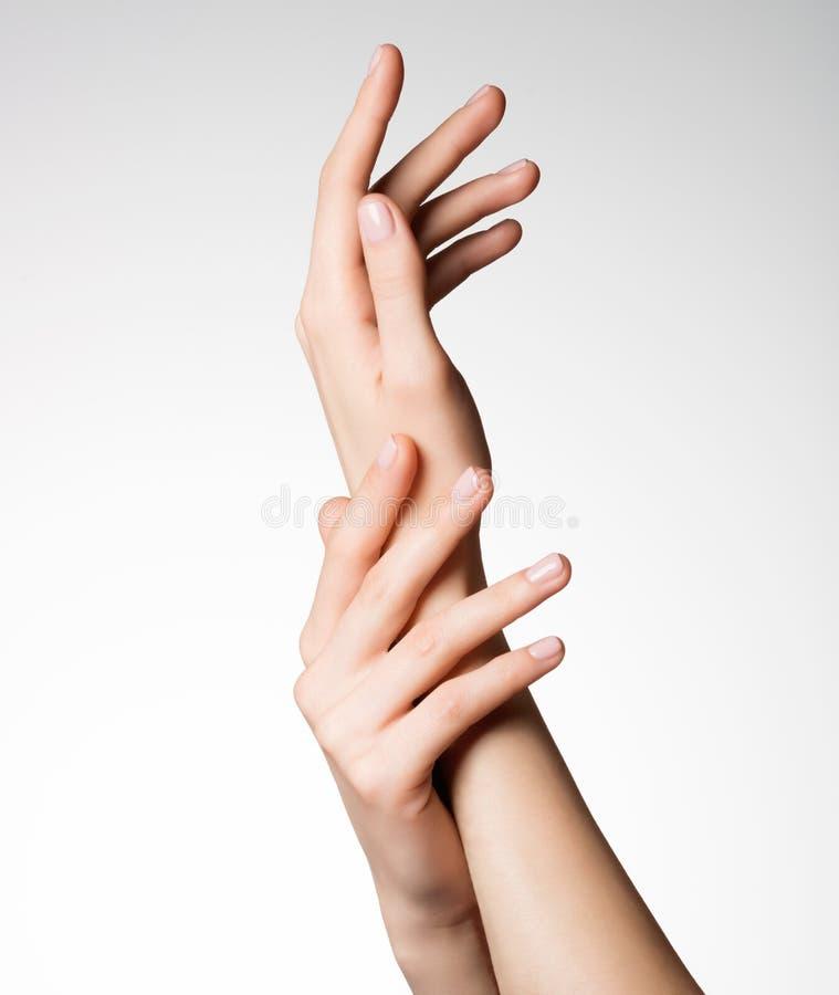 有健康干净的皮肤的美好的典雅的女性手 库存图片