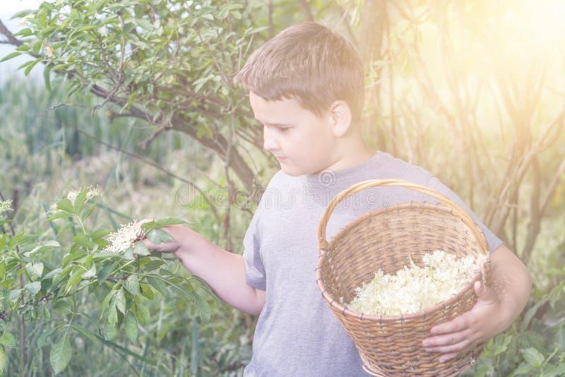 有充分的草本花篮子的男孩 免版税库存照片