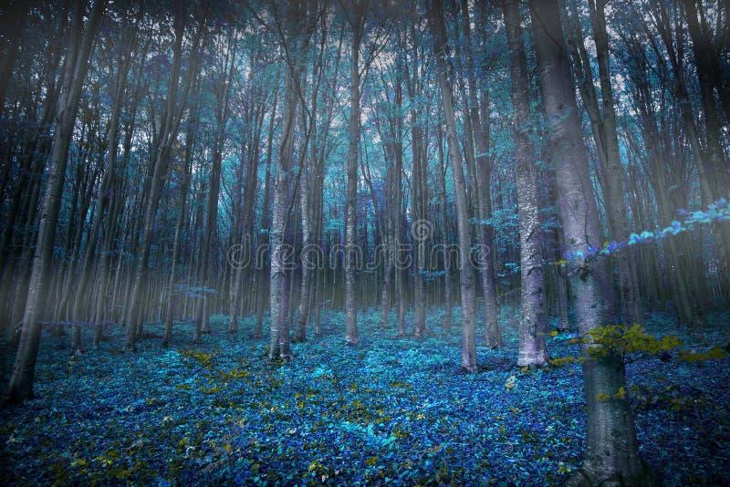 有光和蓝色植被的,公平的魔术阴沉的超现实的森林 免版税库存照片