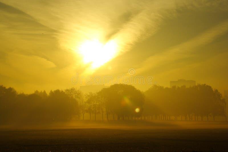 有光秃的树和下落的叶子的秋天看法有雾的公园胡同 免版税库存照片