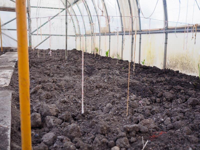 有光秃,未播种的土地的春天温室 塑料温室的内部有袜带的,蕃茄的绳索 库存图片