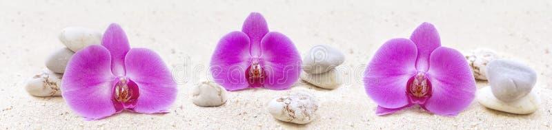 有兰花和禅宗石头的全景 库存照片