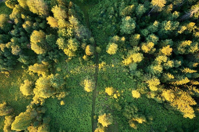 有农村路的森林在日落 与寄生虫的航拍 库存照片
