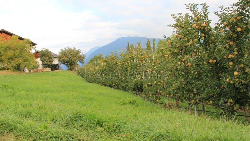 有农舍和山景城的苹果计算机种植园 库存图片