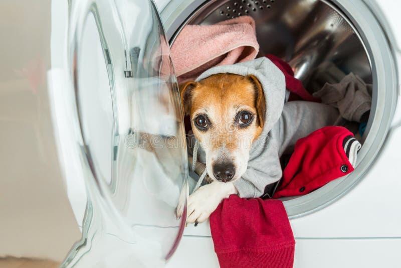 有冠乌鸦看从洗衣机的毛线衣狗 图库摄影
