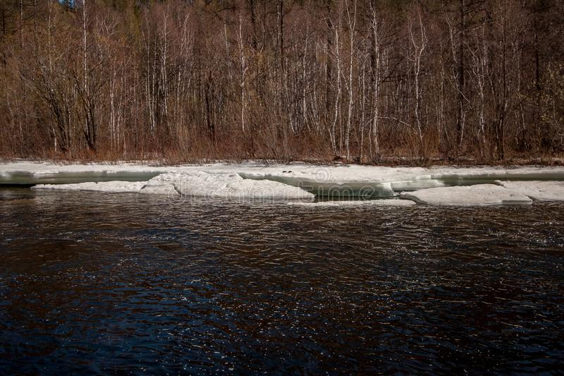 有冰的河在有树的春天在背景中 免版税库存照片