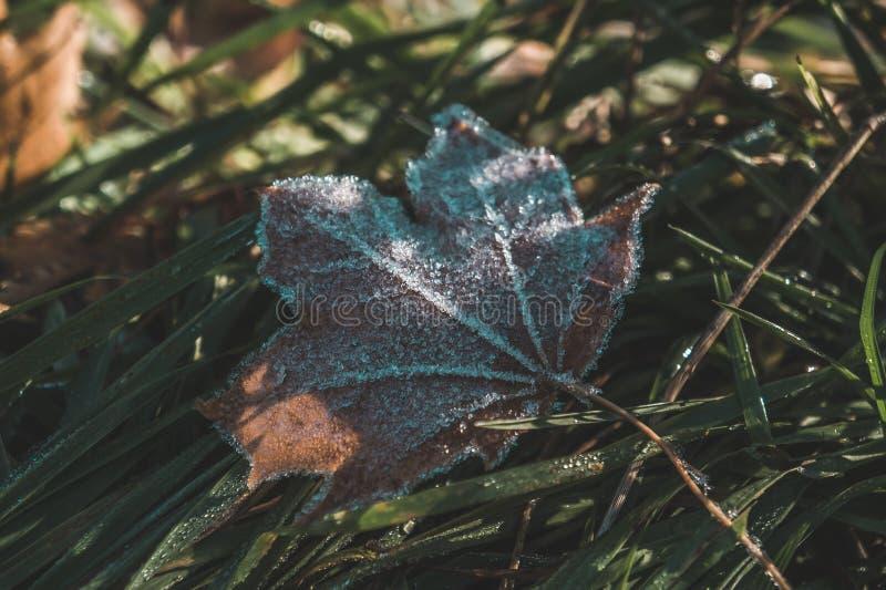 有冰的美丽的叶子 免版税库存图片