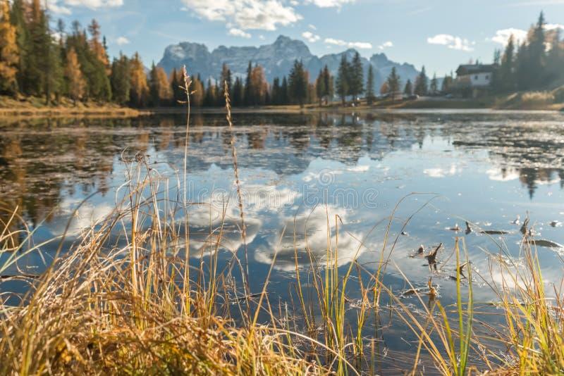 有凋枯的草的湖 免版税库存照片