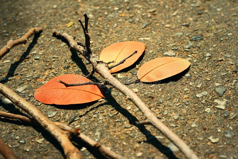 有分支的叶子 免版税图库摄影