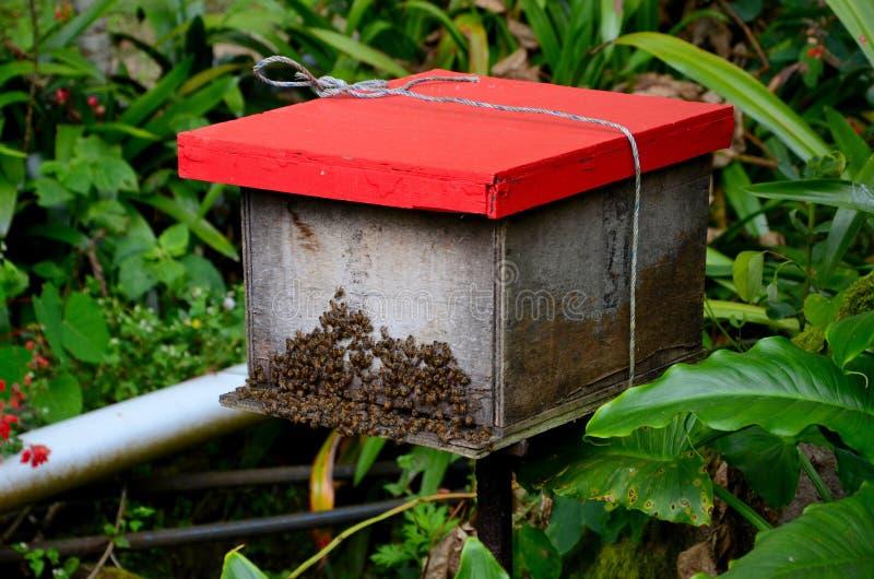 有创造的蜂蜜蜂的红色木箱子为蜂蜜和蜂给金马仑高原马来西亚打蜡 免版税库存图片