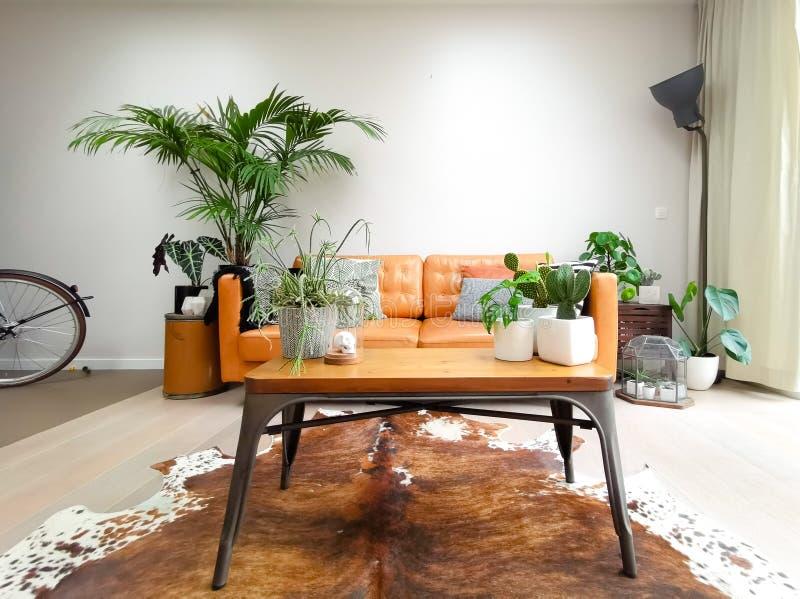 有创造都市密林的棕色皮革长沙发和许多室内植物的轻的现代客厅 免版税库存图片