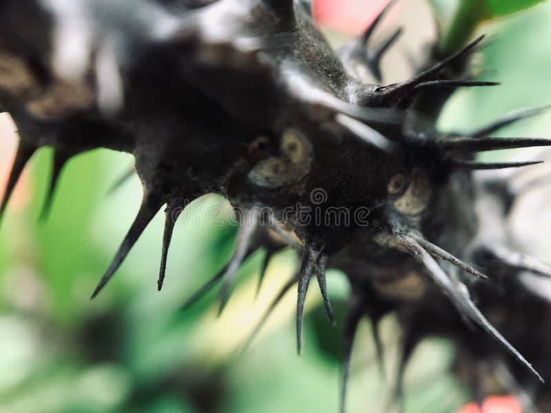 有刺的植物不是安全的 库存图片