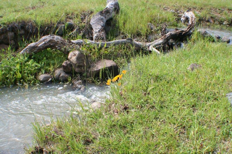 有加利福尼亚的Poppiess乡下有优质的小河的 免版税库存照片