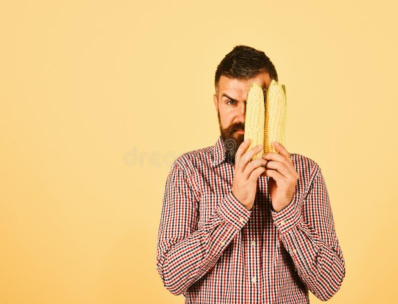 有半暗藏的严肃的面孔的农夫拿着黄色玉米 库存图片