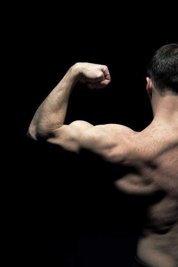有半躯干的,后面看法人运动员 运动员导电线胳膊肌肉 爱好健美者展示二头肌和三头肌 锻炼和 免版税库存照片