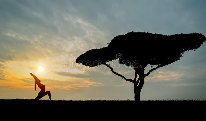 有单独树的剪影瑜伽少妇 库存图片