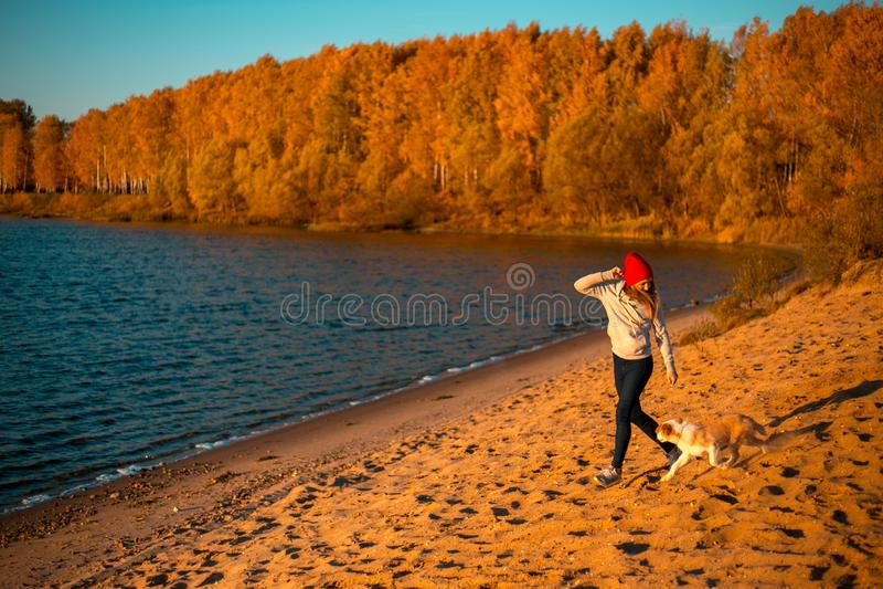 有博德牧羊犬狗的女孩在海滩在海边 背景的秋天黄色森林 库存照片