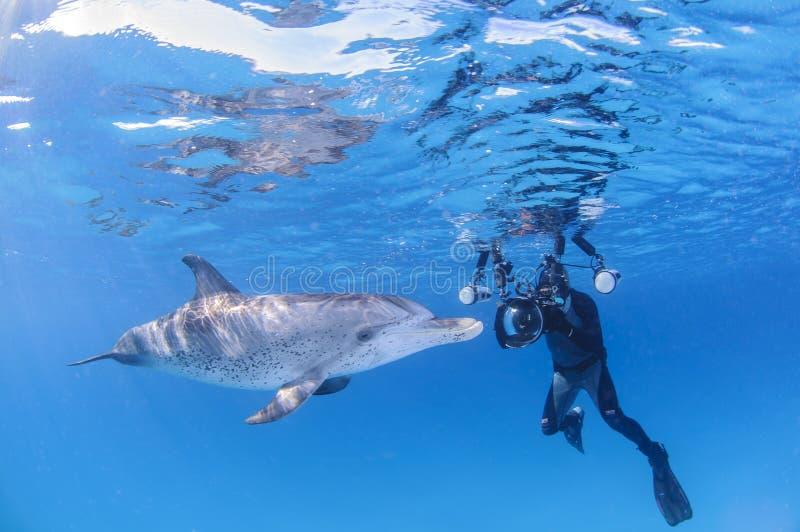 有友好的海豚的水下的摄影师在巴哈马的清楚的水域中 库存照片