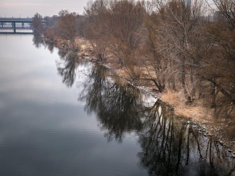 有反射在水中的树的河多瑙河 免版税库存图片