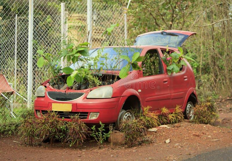 有发芽的植物的一辆被放弃的红色汽车 库存图片