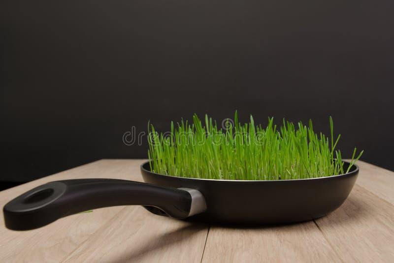 有发芽的麦子五谷的照片平底锅 库存照片