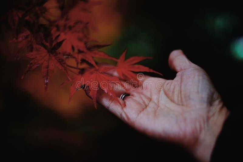 有叶子的现有量 库存图片