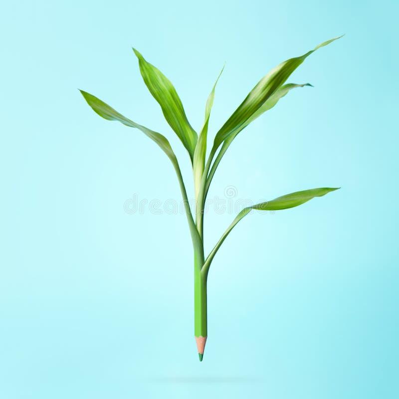 有叶子的绿色铅笔 库存图片