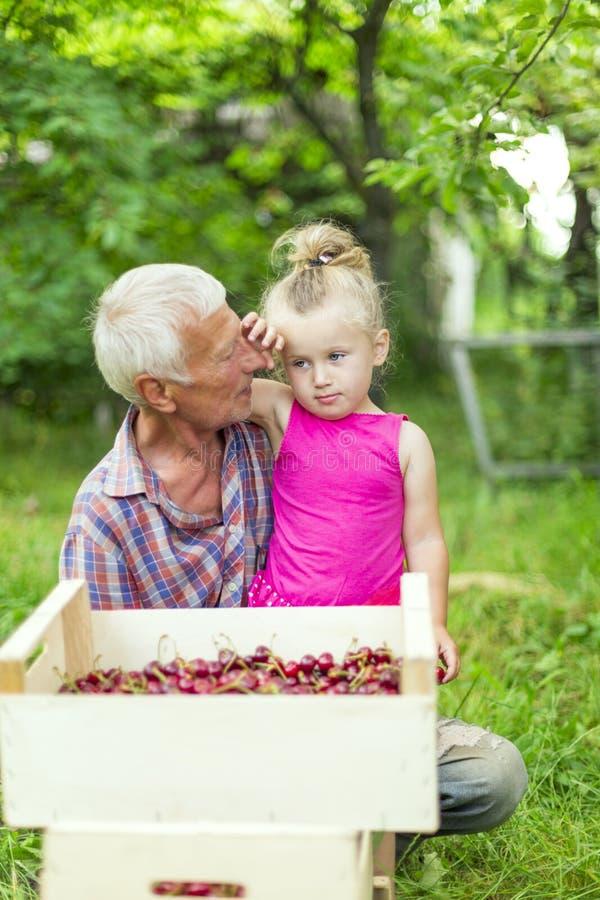 有吃樱桃的孙女的祖父 库存图片