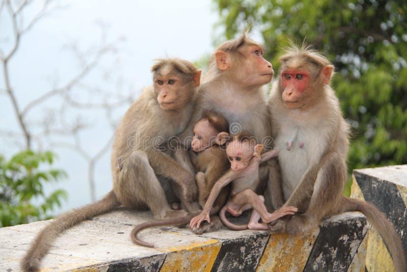 有同情心的猴子 免版税库存图片