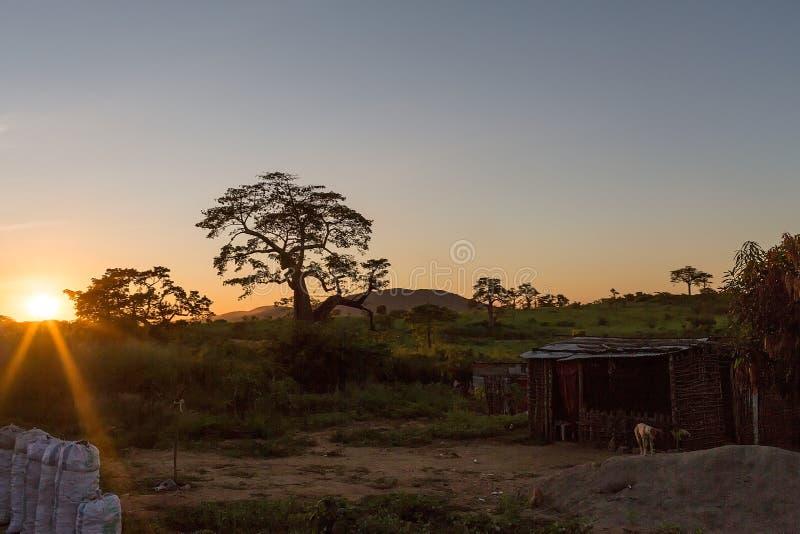 有后边日落和密林的非洲乡村,包括t 库存图片