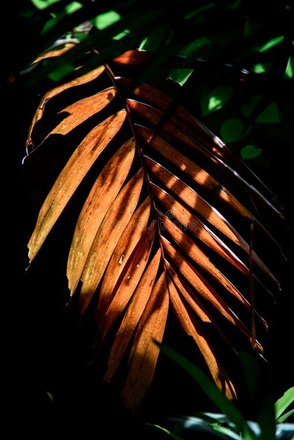 有后面光的,自然摘要干叶子 库存照片