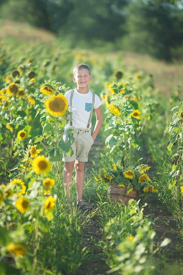 有向日葵篮子的一个微笑的男孩  微笑的男孩用向日葵 向日葵的领域的一个逗人喜爱的微笑的男孩 库存图片