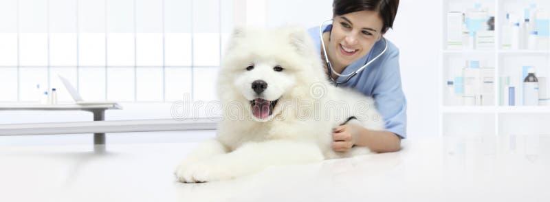 有听诊器的狗兽医考试微笑的兽医 免版税图库摄影