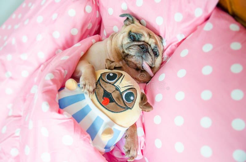 有吸引力的小狗哈巴狗狗睡觉休息很好在拥抱婴孩的床上 库存图片