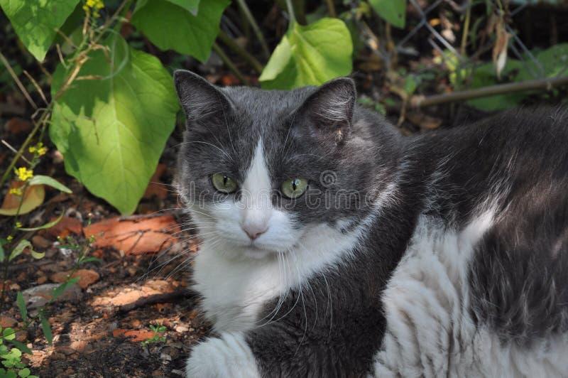 有吸引力迷人的猫-和油脂(动物和nat 免版税图库摄影