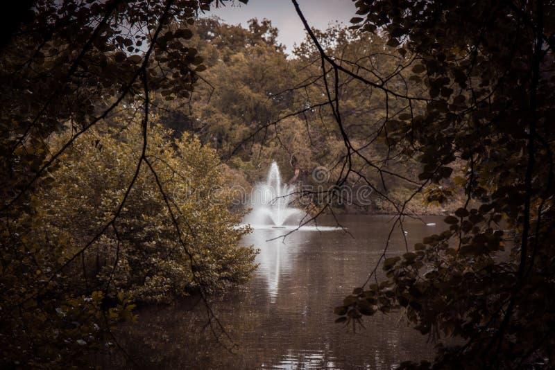 有喷泉的喜怒无常的公园在树中 图库摄影