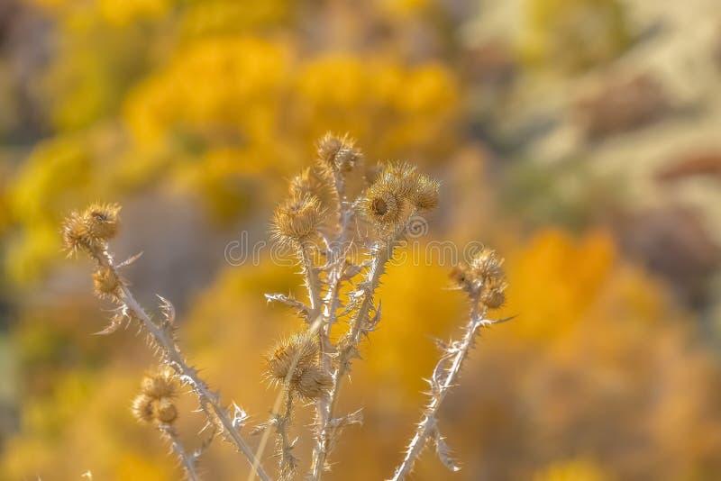 有圆的尖刻的花和棘手的词根的植物 库存照片
