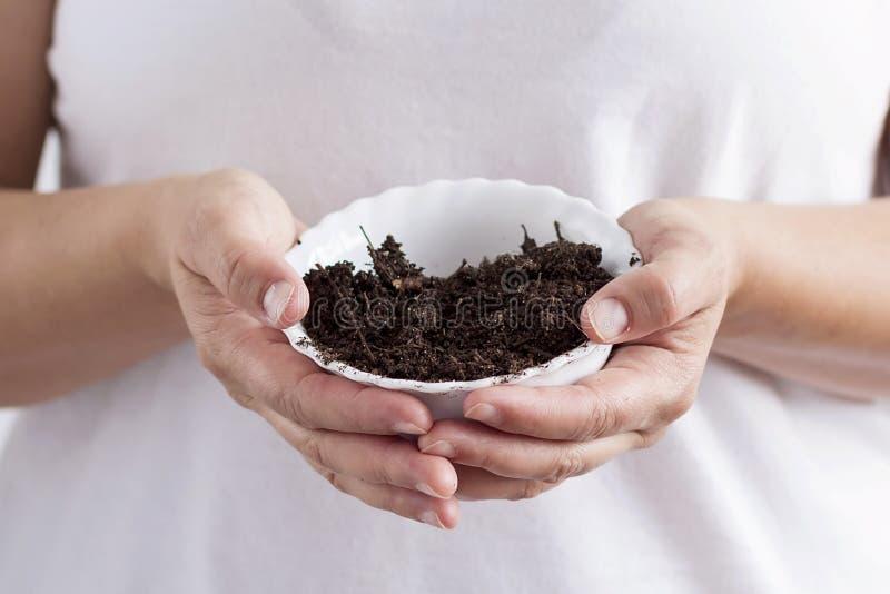 有土壤的一个碗 库存图片