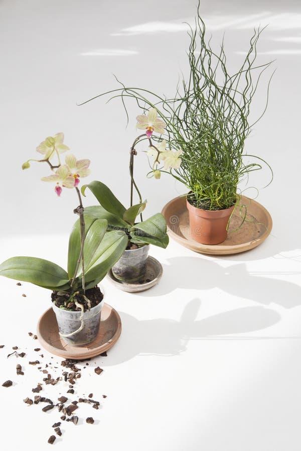 有土的盆的植物 库存照片
