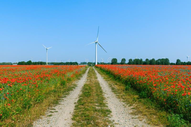 有土路和风轮的红色鸦片植物和树在背景中 库存照片
