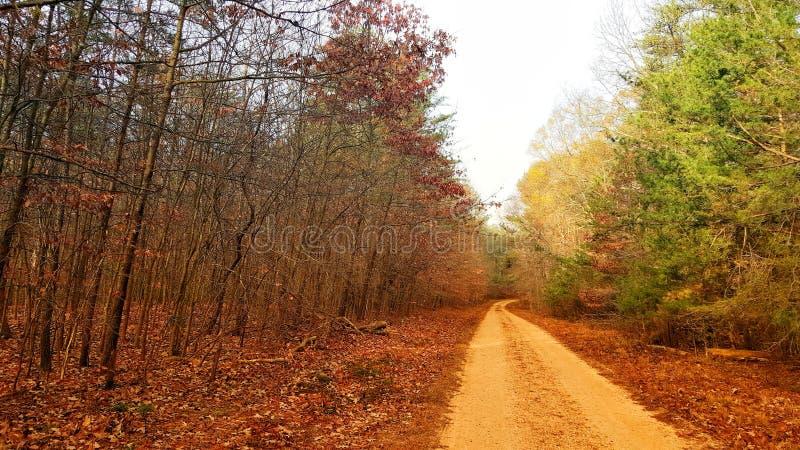 有土路的森林 免版税库存图片